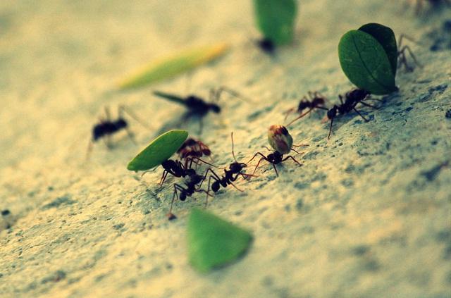 النملة بلا قائد ولا عريف؟التي ليس لها قائد او عريف او متسلط