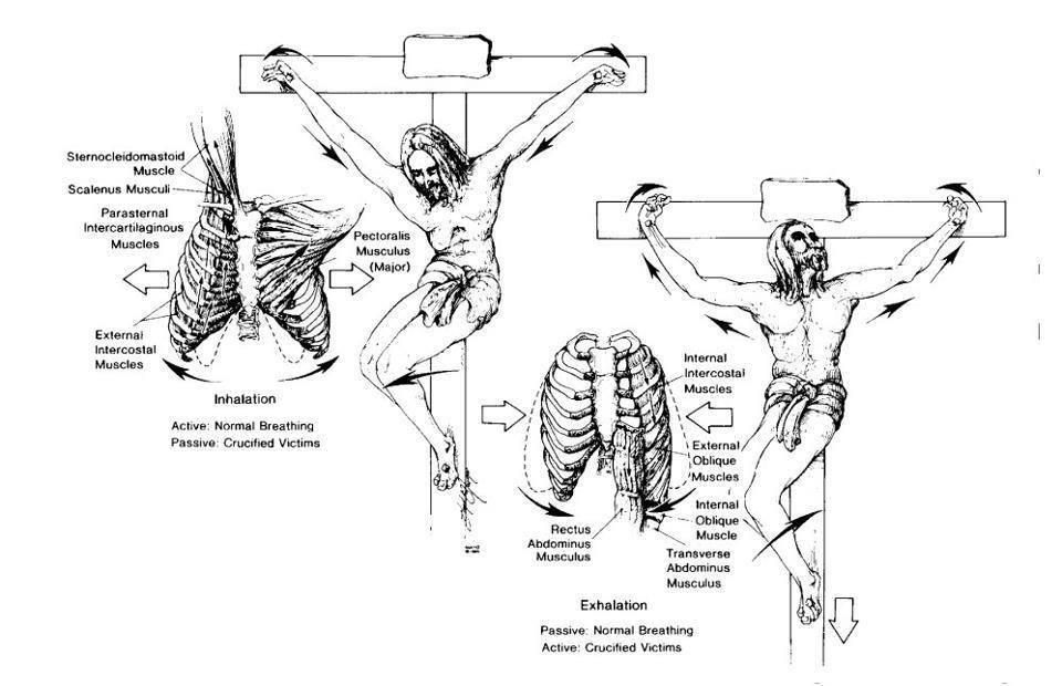 التفاصيل التشريحية والوظيفية لموت المسيح على الصليب - للدكتور ترومان دافيس