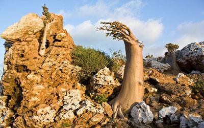 لماذا لعن الرب يسوع شجرة التين؟