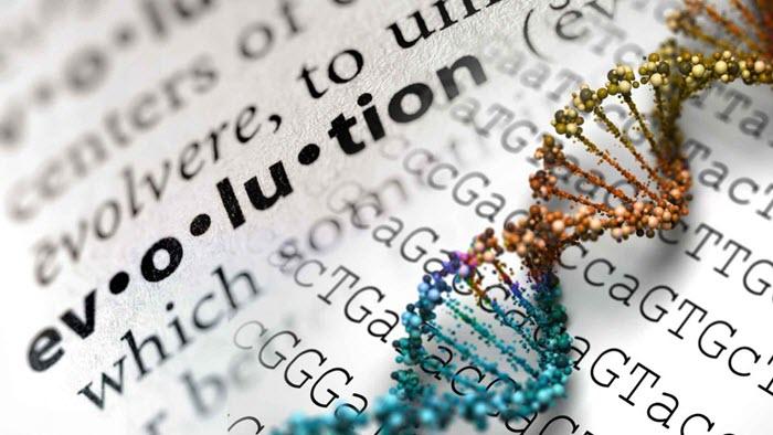 صور التطور - لي ستروبل