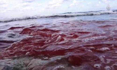 أمن الدولة: خلية مطروح سلمت داعش ليبيا 20 مسيحيًا لذبحهم
