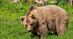 اليشع وقتل الدببة لمن نادوه يا أصلع - ديفيد لامب