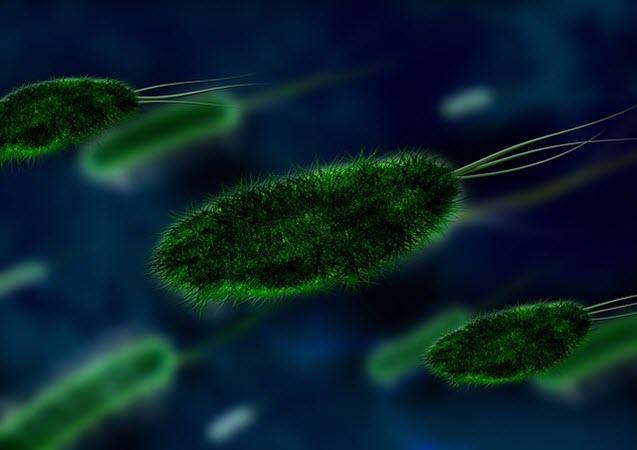 الحياة على الأرض من الميكروبات والإنسان - كتاب لغة الله - فرانسيس كولينز PDF