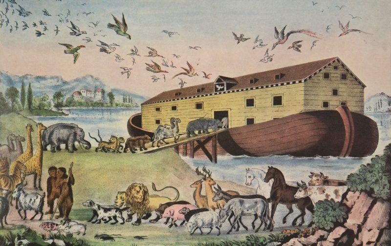 الرحلة العجيبة: كيف استطاع نوح العناية بالحيوانات؟ ترجمة: فيفيان فايز مينا