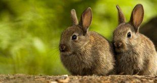 هل الأرنب يجتر؟ هل أخطأ موسى النبي؟ - ترجمة: مينا خليل