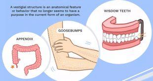 الأعضاء الضامرة (الآثارية) في جسم الإنسان - د. ALL IN ONE