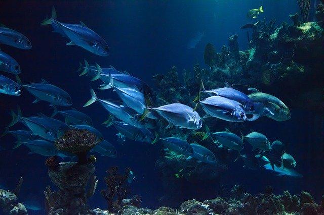 قد تذكرنا السمك الذي كنا نأكله في مصر مجانا، والقثاء والبطيخ والكراث والبصل والثوم سفر العدد عدد 11: 5